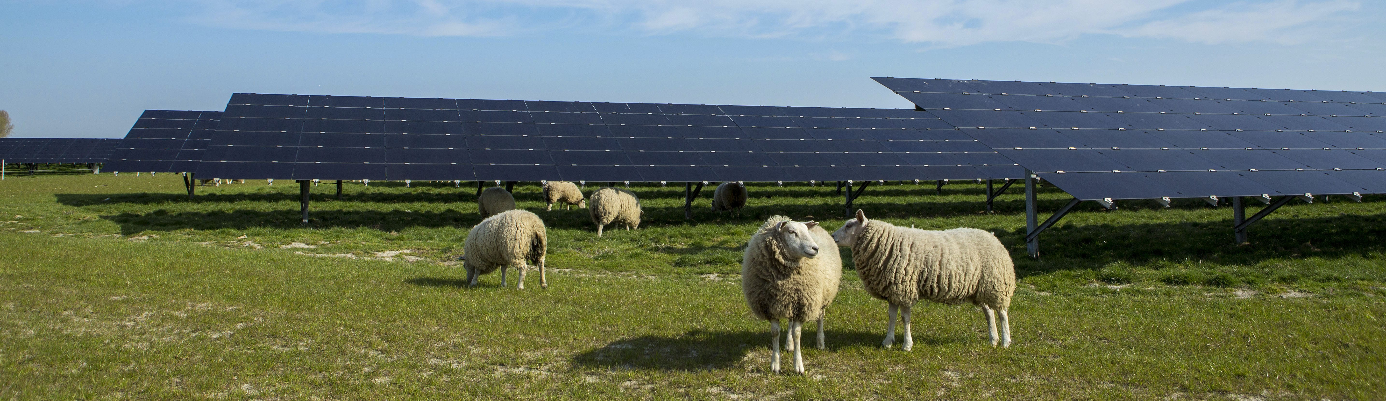 zonnepanelen_SolarEnergyWorks