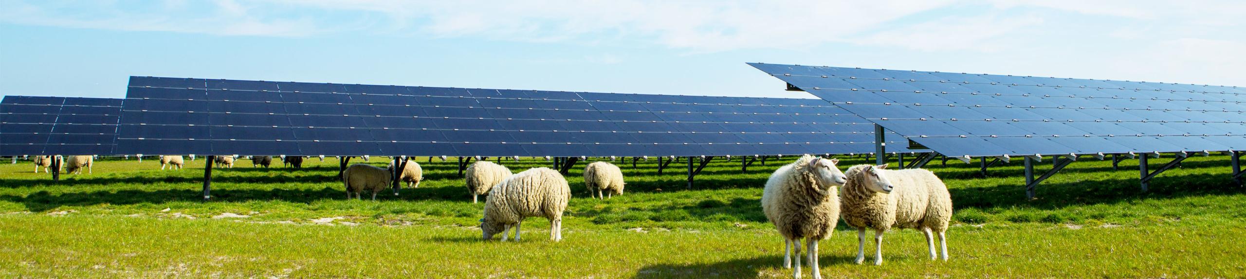 Grondeigenaar zonnepark